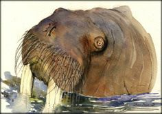 8x5 Walrus Arctic Seal Marine Original Art Watercolor Animal Painting Juan Bosco | eBay