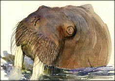 8x5 Walrus Arctic Seal Marine Original Art Watercolor Animal Painting Juan Bosco | eBay
