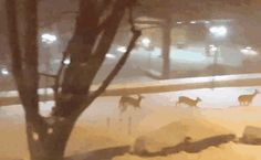 Deer Frolicking In The Street In Cleveland Park | Bored Panda