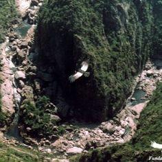 ¿Viste Pumás y Condores Silvestres? Quebrada del Condorito, Cordoba Argentina