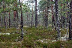 https://flic.kr/p/GtgLVB | The Life of Trees | © copyright Annika Ruohonen 2017  annikaruohonen.wordpress.com