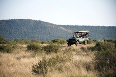 Best Photo Safaris to South Africa - Where Lions Roam Tanzania Safari, African Safari, Lions, Photo S, South Africa, Cool Photos, Wildlife, Country Roads, Vacation