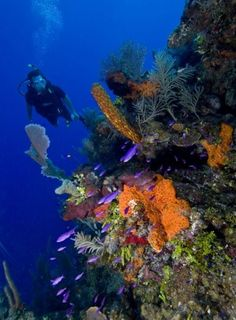 Belize - a paradise for snorkeling and diving!