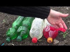 Sistem de irigare prin picurare cu PET-uri si 4 fire diferite. Diferenta de picurare - YouTube Drip Irrigation, Peta, Youtube, Fii, Gardening, Drink Bottles, Google, Horticulture, Plant