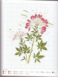 Gallery.ru / Фото #8 - Herbier - Mosca
