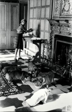 The Queen Feeding Her Corgis, 1976