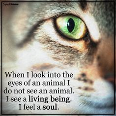 When I look into the eyes of an animal...