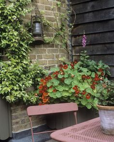 Love the rustic lantern hung on the patio wall, Nasturtium & Foxglove fill the back container