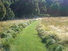 Mown lawn path through meadow