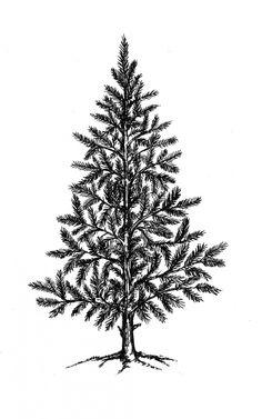 Christmas Tree Single