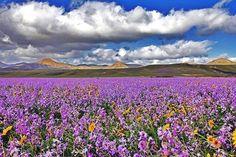 Primavera en Lanzarote