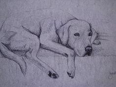 kreslený pes tužkou - Hledat Googlem