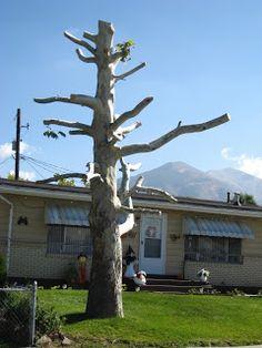 Spooky Halloween Tree, or how take halloween too far!