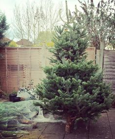 Fab, fresh, non drop XMAS trees starting at only £40! FREE delivery anywhere in North London