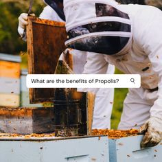 What are the health benefits of propolis and how can it positively effect my body?  Propolis is high in vitamins and minerals, including Vitamin B1, B2, B6, C, E, and P, calcium, copper, iodine, iron, magnesium, potassium, sodium, and zinc. It also contains a high concentration of flavonoids, which contribute to beneficial amino acids and other compounds.   > Anti-inflammatory properties reduce inflammation throughout the body, improving overall health, and reducing the symptoms of chronic… Vitamin B1, Reduce Inflammation, Amino Acids, Vitamins And Minerals, Health Benefits, Copper, Iron, Brass, Steel