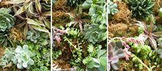 How To... Trellis Moss Garden from Lowe's