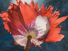 Sunlit red poppy from underneath - painting - Dina Belga, artist