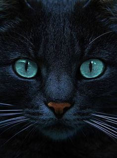 Love those eyes! Black cats with blue eyes are awesome. Blue Is The Night by Joachim G Pinkawa