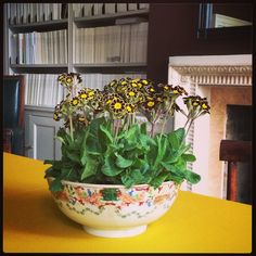 library, mantel, antique bowl filled with flowers (Gold laced polyanthus)