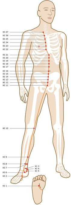 Acupuncture Points On Your Legs & Feet What acupuncture points are located on your legs and feet? On this page I'll show you all of the acupuncture meridian points from our free online acupuncture points guide that are located along your legs and Meridian Acupuncture, Acupuncture Points, Acupressure Points, Tai Chi, Qigong, Alternative Therapies, Alternative Medicine, Meridian Points, Craniosacral Therapy