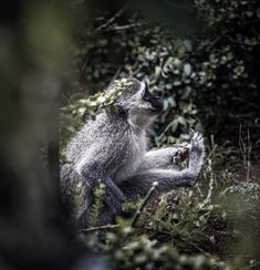 I somehow managed to capture this beautiful moment on a monkey capturing and enjoying his meal Beautiful Moments, Wildlife Photography, Monkey, My Photos, Africa, Walking, Meal, In This Moment, Bird