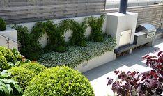 Large jasmines