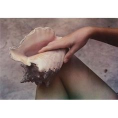 Hand, shell, and leg by Paul Outerbridge Jr.