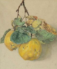 Unknown (European) Study of a Branch of Quinces 19th century