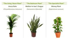 recycle indoor air 100% with just 3 plants