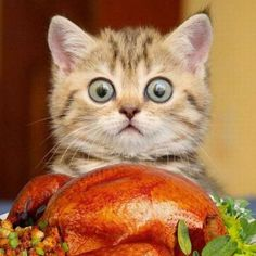 gatto con oblò
