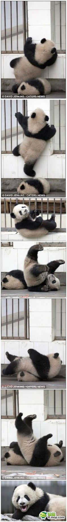 Great Escape by Panda