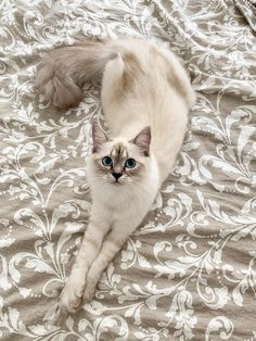 Bring Me Cats! Bring Me Cats! The post Bring Me Cats! appeared first on Katzen. Cute Cats And Kittens, I Love Cats, Crazy Cats, Kittens Cutest, Pretty Cats, Beautiful Cats, Animals Beautiful, Baby Animals, Funny Animals
