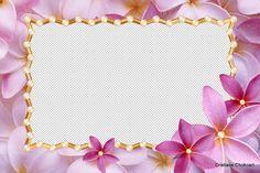 Cartão De Aniversário Que Eu Possa Escrever Em Hd Grátis 7