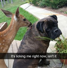Animals are the best, but they don't shine any brighter than when their adorable antics get caught on camera. These are some of the best examples. Funny Animal Pictures, Cute Funny Animals, Funny Animal Videos, Animal Memes, Funny Cute, Funny Dogs, Cute Dogs, Random Pictures, Animal Antics