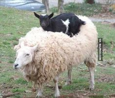 """"""" It wasn't my fault, but i'll have to be on the lamb for a while."""""""