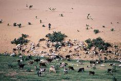 Niger, Steve McCurry