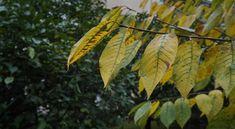 Sárgulnak a levelek a fákon, mit tegyek? – Szakértőnk segít!