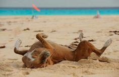 cane al mare che si rotola sulla sabbia | Tutto Zampe  Dog in the beach
