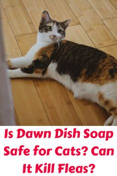 Is Dawn Dish Soap Safe for Cats? Can It Kill Fleas? Sometimes cats can be little rascals who get themselves into big messes. I know my cats have knocked. Cat Skin Problems, Cleaning Grease, Cat Has Fleas, Killing Fleas, Cat Bath, Dawn Dish Soap, Cat Sitting, Pet Store, Dishes