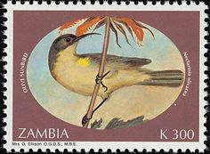 Olive Sunbird stamps - mainly images - gallery format