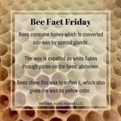 Bees eat honey and excrete wax from their abdomens