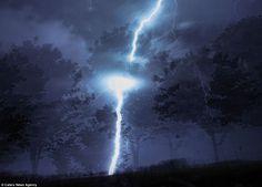 Storm chasing: Photographer Richard Gottardo drove around Toronto through sheets of rain but managed to capture lightning striking a tree