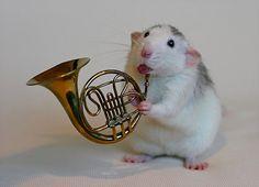 The Life Of Pet Rats | Ellen van Deelen gets creative with her pet rats Moppy and Witje 2013