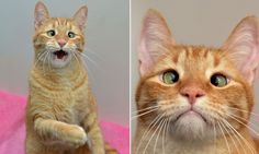 How cross-eyed cat was left to die by his first owner but was rescued #DailyMail