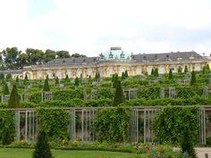 Schloß Sanssouci, stepped vineyard