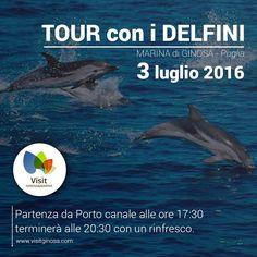 Un'esperienza che dovete fare almeno una volta nella vita è l'escursione con i delfini, un'attività unica ed emozionante. L'associazione sportiva culturale ricreativa Master Wave vi accompagnerà in questa meravigliosa esperienza, dove avrete l'opportunità di ammirare da vicino i delfini e i loro spettacoli. La durata dell'escursione è in media di 2 ore e 30 minuti. …