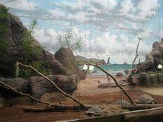 Galapagos-Schildkröten mir Wandmalerei im Darwineum (c) Frank Koebsch - Das Darwineum ist ein absolutes Highlight im Rostocker Zoo, mehr Informationen unter http://frankkoebsch.wordpress.com/2012/09/22/die-grosten-wandmalereien-in-rostock/