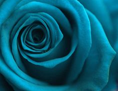 Rose by any other name is...Turquoise! :)