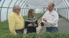 Grow with KARE: Grafted tomatoes