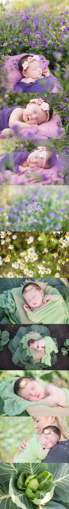 Melanie Bennett Photography|Newborn Photography   Outdoor Newborn Photography| Evoking You| Wildflowers| Cabbage Patch| Baby Girl